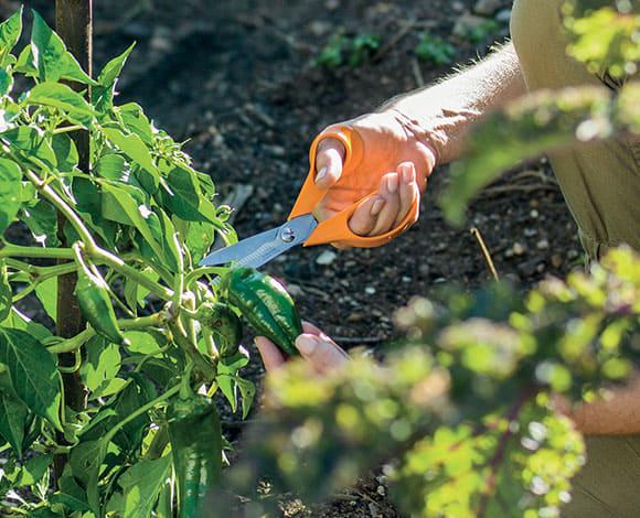 Ciseaux de jardin - 18 cm